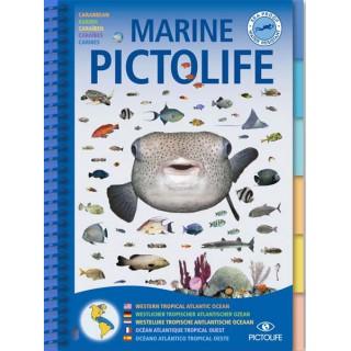 Marine PICTOLIFE Atlantique tropical ouest